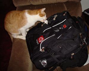 Backpack survives cat.